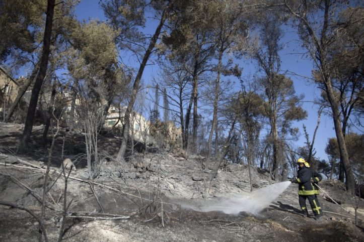 Arson Suspected As Wild Fires Rage Across Israel
